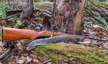 Squirrel Hunting-A Complete Guide