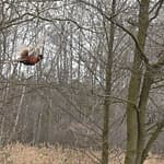 5 Ways to go Pheasant Hunting Without a Dog