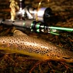 Best Trout Lures For Shore Casting