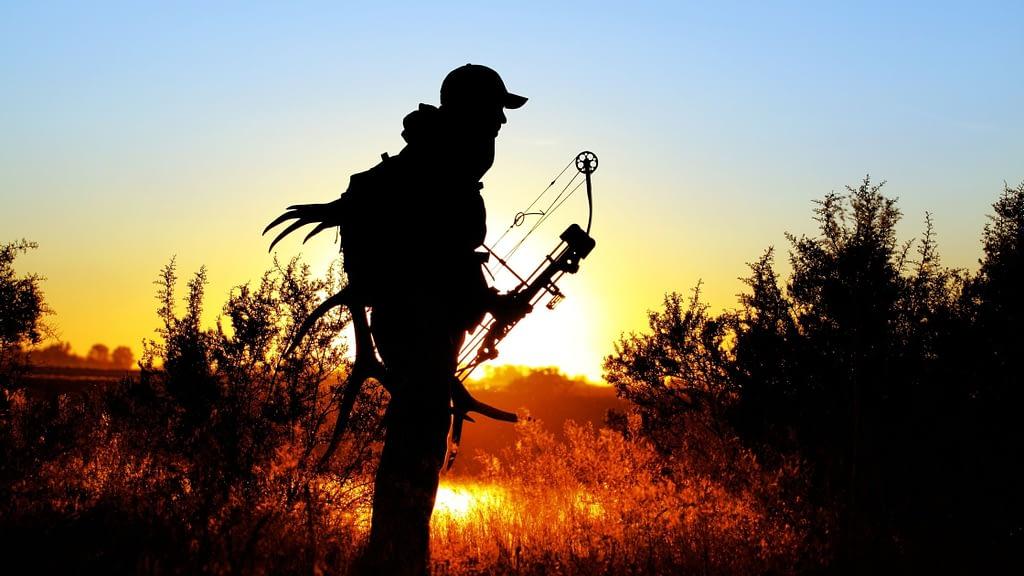 elk bow hunting