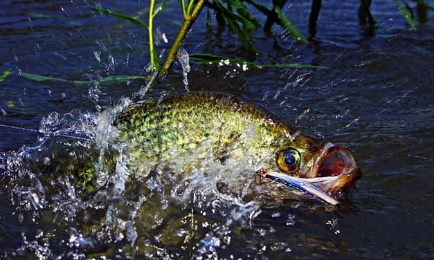 Crappie Fishing: All You Need To Know