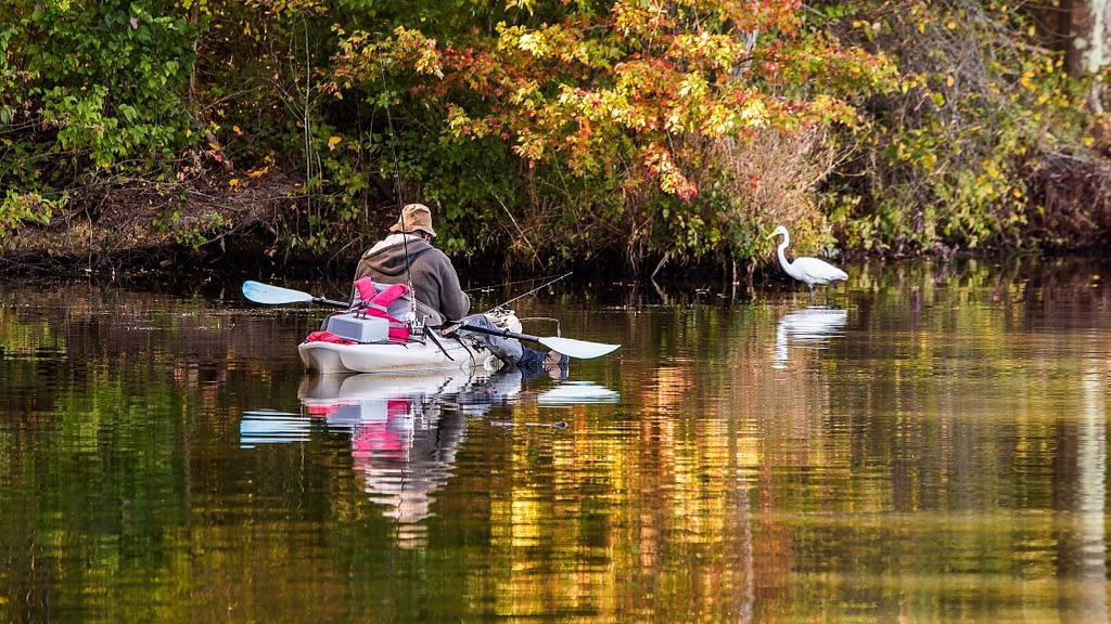 Kayak fishing wildlife watching