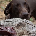 Can Dogs Eat Deer Meat?