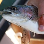 A Comprehensive List of The Best Live Bait For Trout