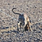 8 Best Deer Tracking Dogs