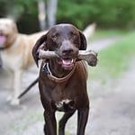Can Dogs Eat Deer Bones? Benefits and Drawbacks