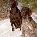 Male vs Female Dogs For Hunting - Which to Choose?