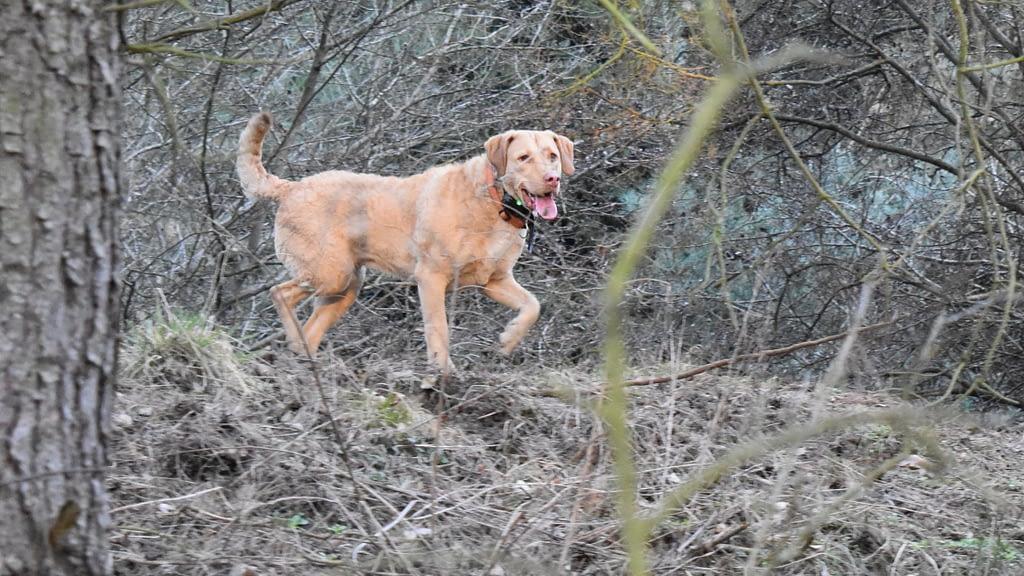 Is Deer Poop Bad For Dogs?