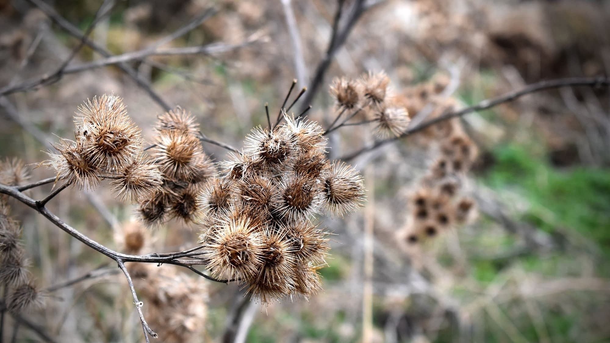 How To Remove Burrs From Hunting Dogs