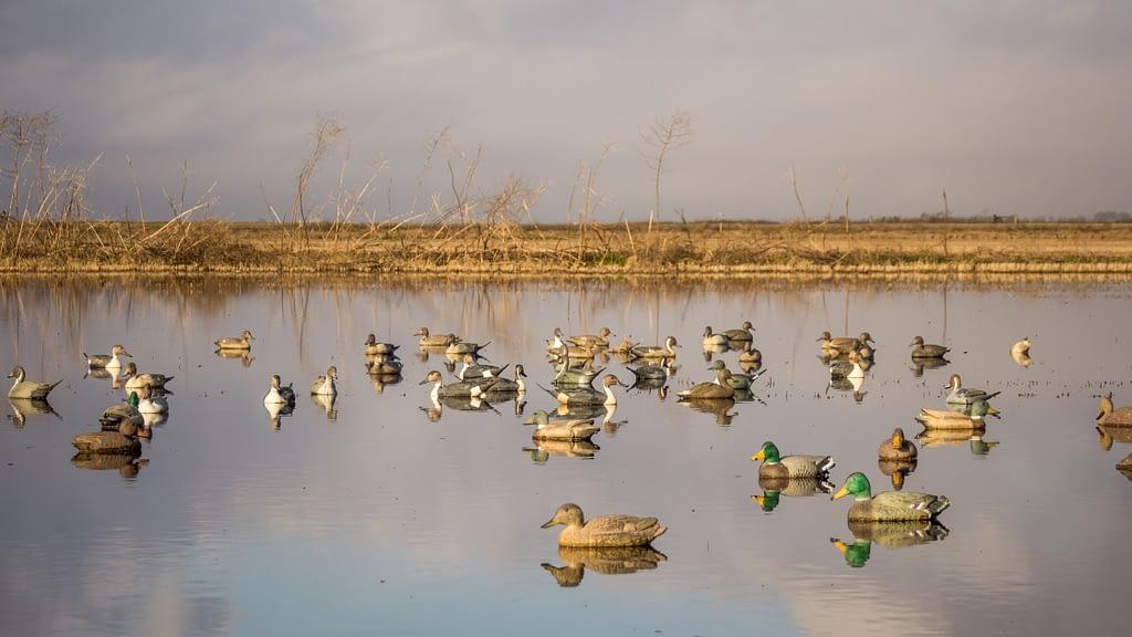 duck hunting decoys