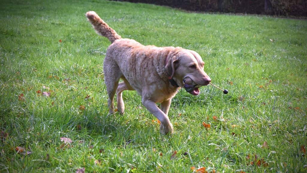 Fetch Toys For Hunting Dogs