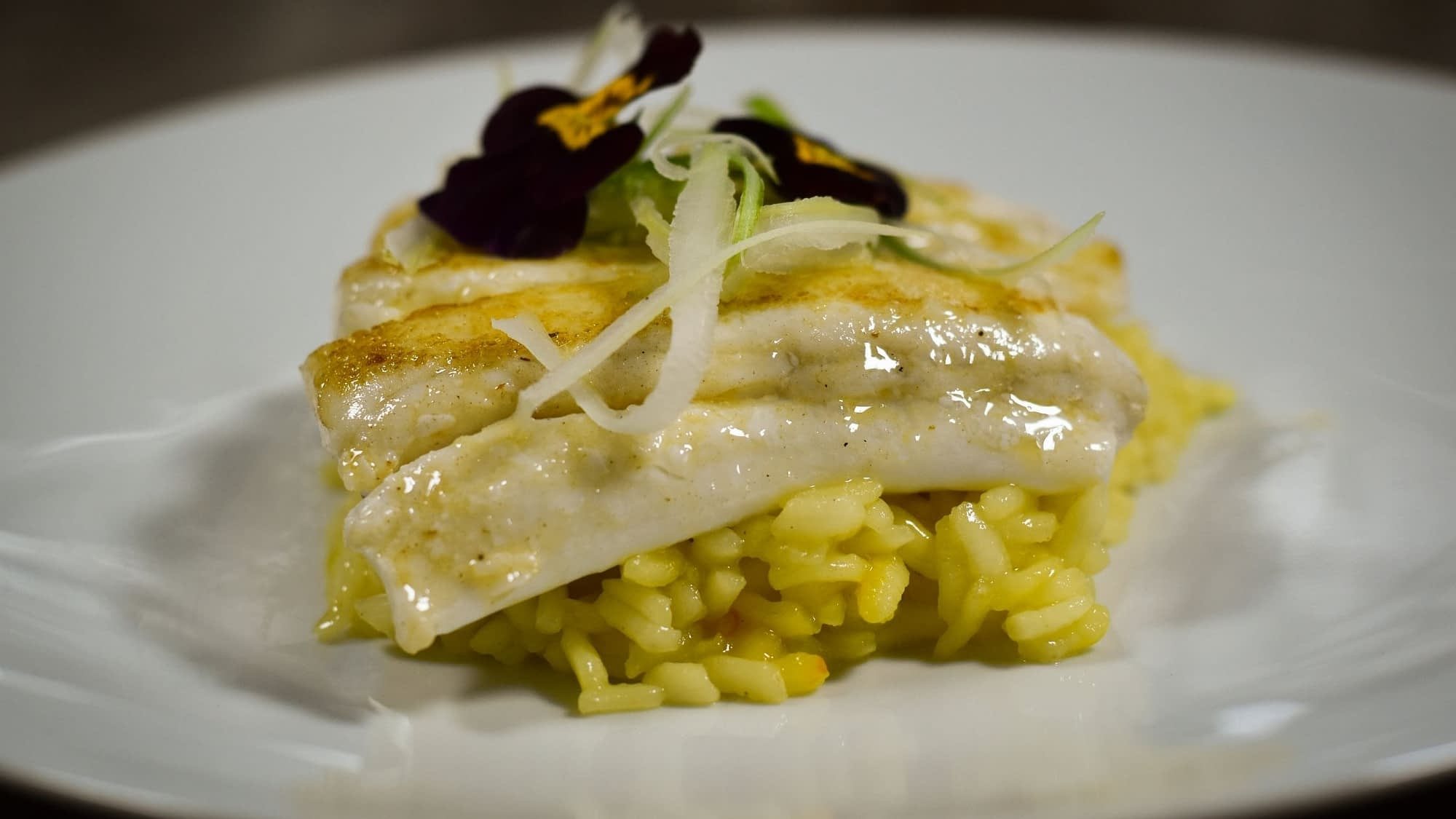halibut on risotto