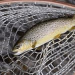 Trout Fishing With Corn