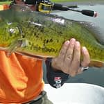 Top 8 Pretty Fish Caught by Anglers